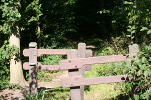 1400948_fence_to_the_forest