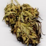 cannabis-biodynamic-130121-m
