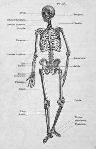 Ortopedzi