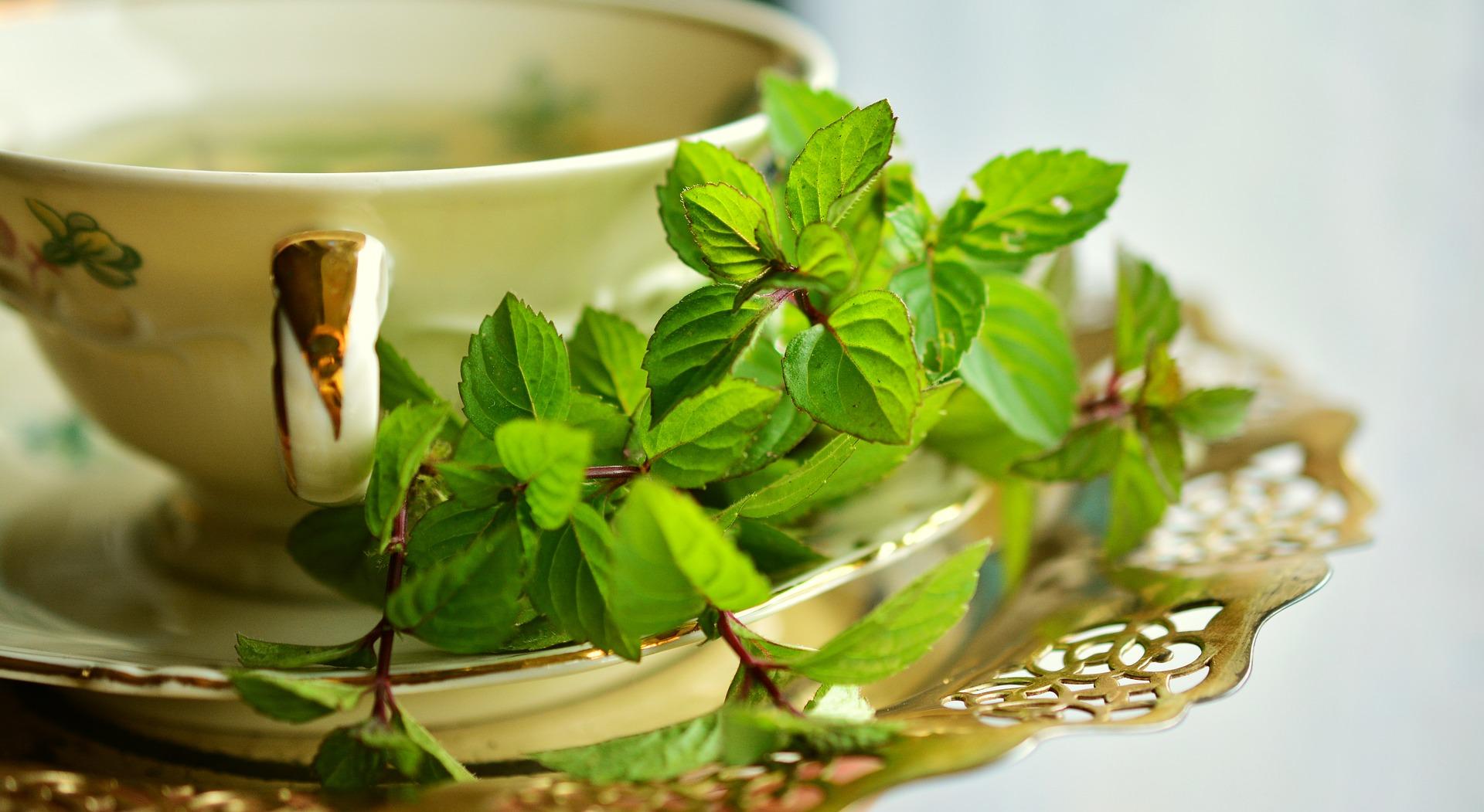 herbata zielona sri lanka