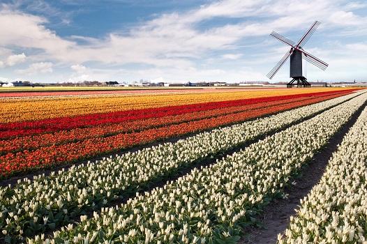 oferty pracy Holandia